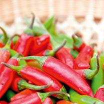Image of Chilli Seeds - Jalapeno