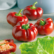 The pepper that thinks it is a tomato! Yes it really is a round, tomato shaped pepper! The dark red, sweet, shiny fruit are ideal for use in salads or