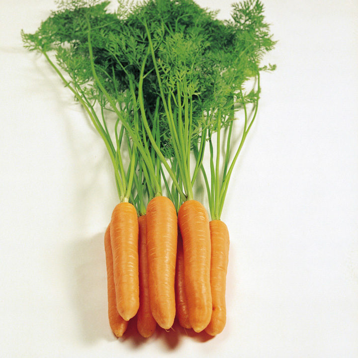 Carrot Seeds - Eskimo F1