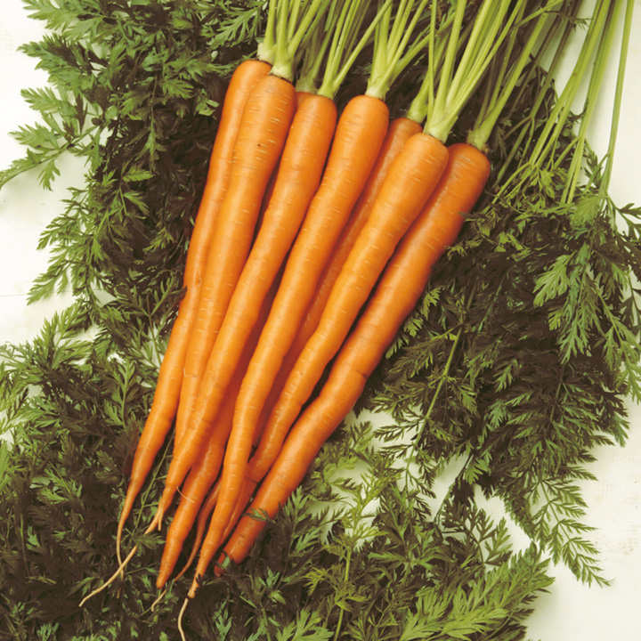 Carrot Seeds - Sugarsnax 54 F1