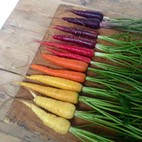 Carrot (Organic) Seeds - Rainbow Mix