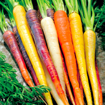 Carrot Seeds - Rainbow Mixed