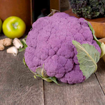 Cauliflower Plants - di Sicilia violetto