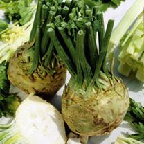 Image of Celeriac Seeds - Brilliant