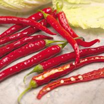 Pepper Plant - De Cayenne