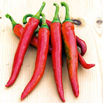 Image of Pepper Chilli Seeds - Romital F1