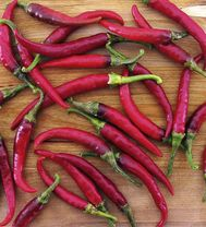 Image of Pepper Chilli Seeds - Ring O Fire