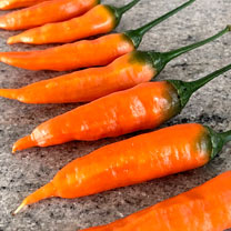 Chilli Seeds - Slowburn