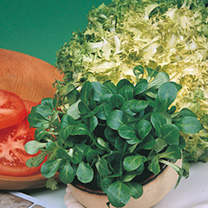 Image of Corn Salad Seeds - Large Leaved