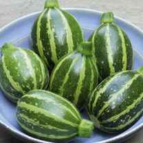Courgette Seeds - Piccolo F1