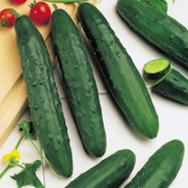 Image of Cucumber Seeds - Marketmore