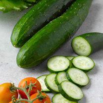 Cucumber Plants - Outdoor Star