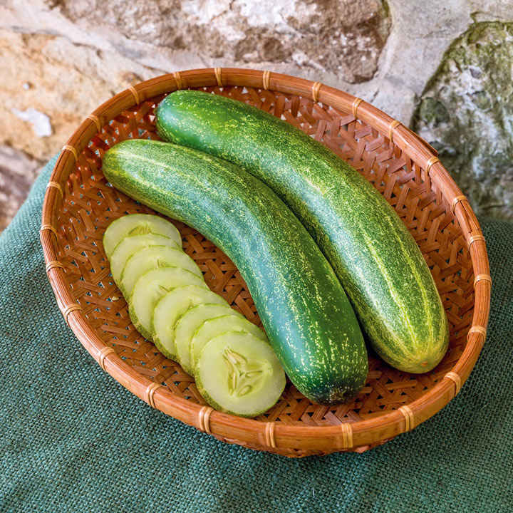Cucumber Seeds - Chompers F1