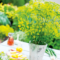Image of Dill Seeds