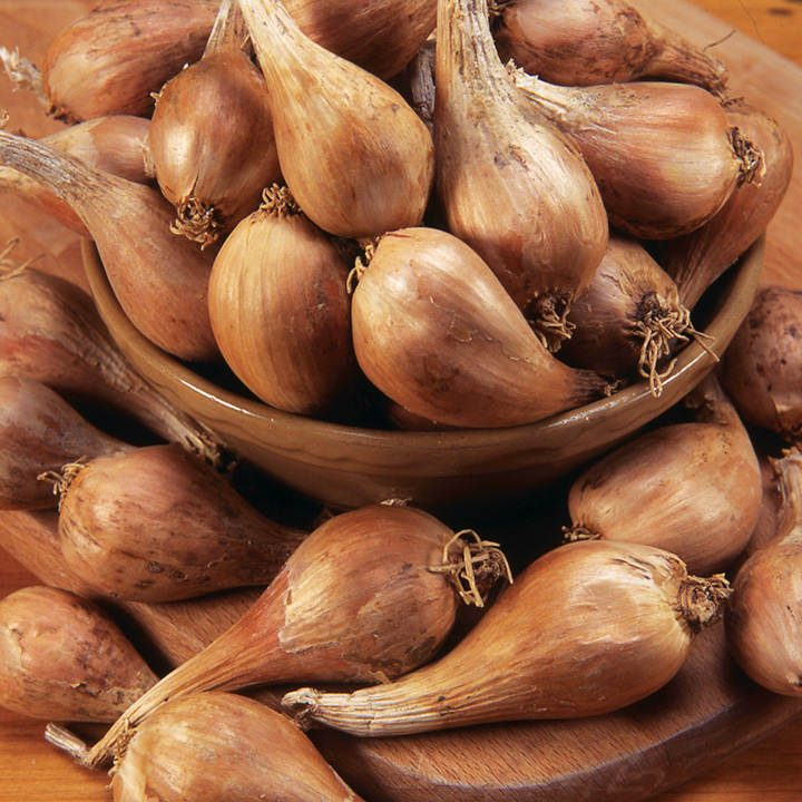 Shallot Bulbs - Autumn Twin Pack