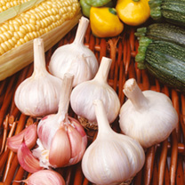 Garlic Bulbs - Flavor