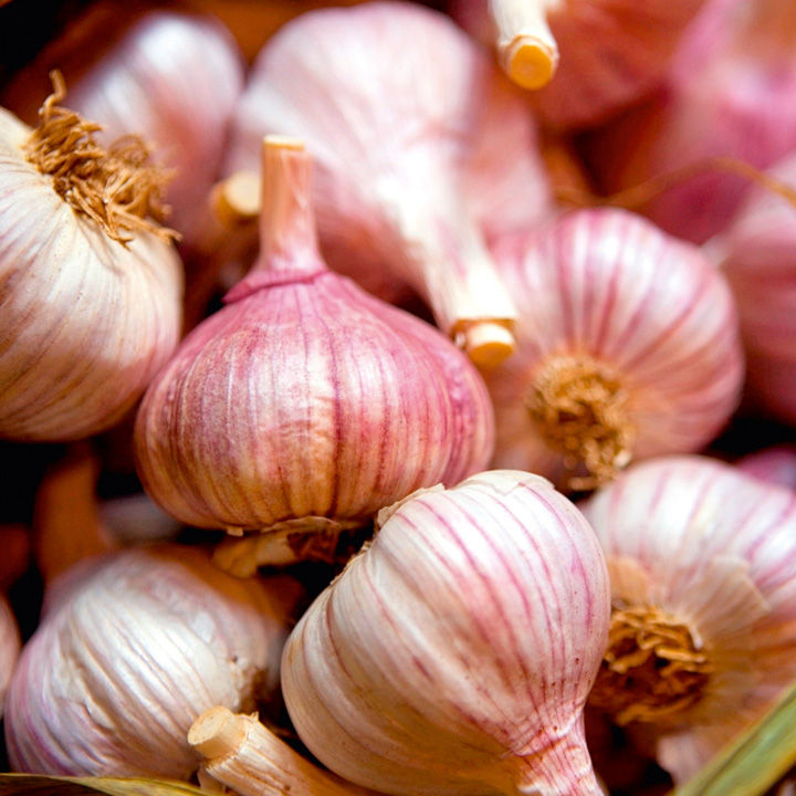 Garlic Bulbs (Autumn) - Edenrose