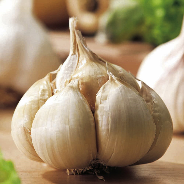 Garlic Bulbs - Messidrome