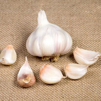 Garlic Bulbs - Picardy Wight
