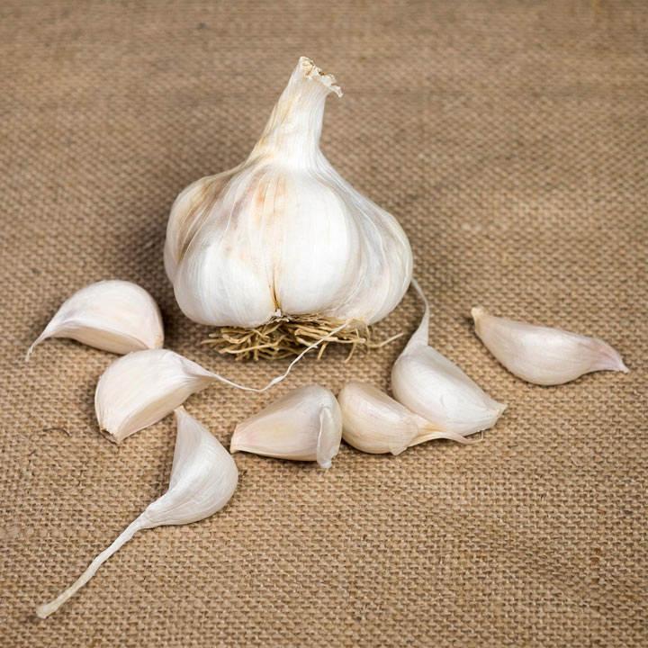 Garlic (Softneck) Bulbs - Provence Wight