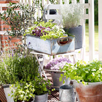 Herb Al Fresco Plants - Collection