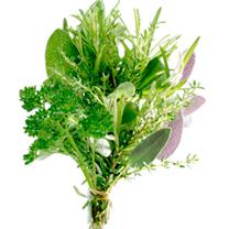 Herb Plants - Bouquet Garni