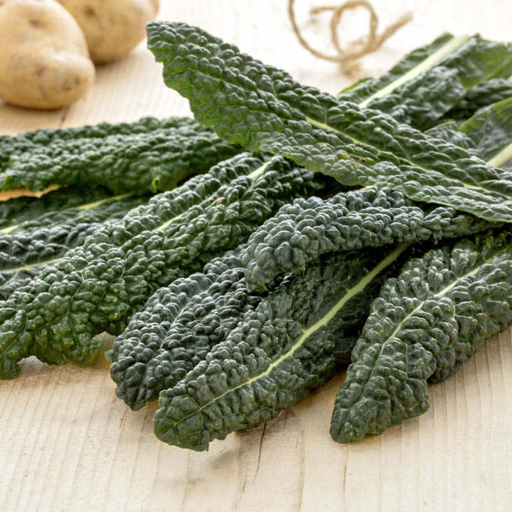 Kale Seeds - Yurok F1