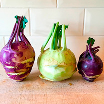Kohlrabi Seeds - Purple and White Mixed