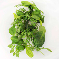 Specially blended items to evoke those holiday memories. Includes Rocket, Cress, Dandelion and Chervil. Easy to grow cut and come again salad.