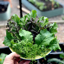 """""""Mind the Gap"""" Leaf Salad Collection"""