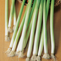 A quick growing and early maturing leek, boasting unusually long, greenish-white, deliciously flavoured stems that can be harvested over a long season