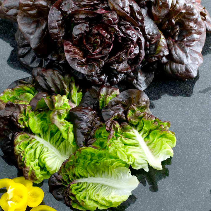 Lettuce Seeds - Red Little Gem Amaze