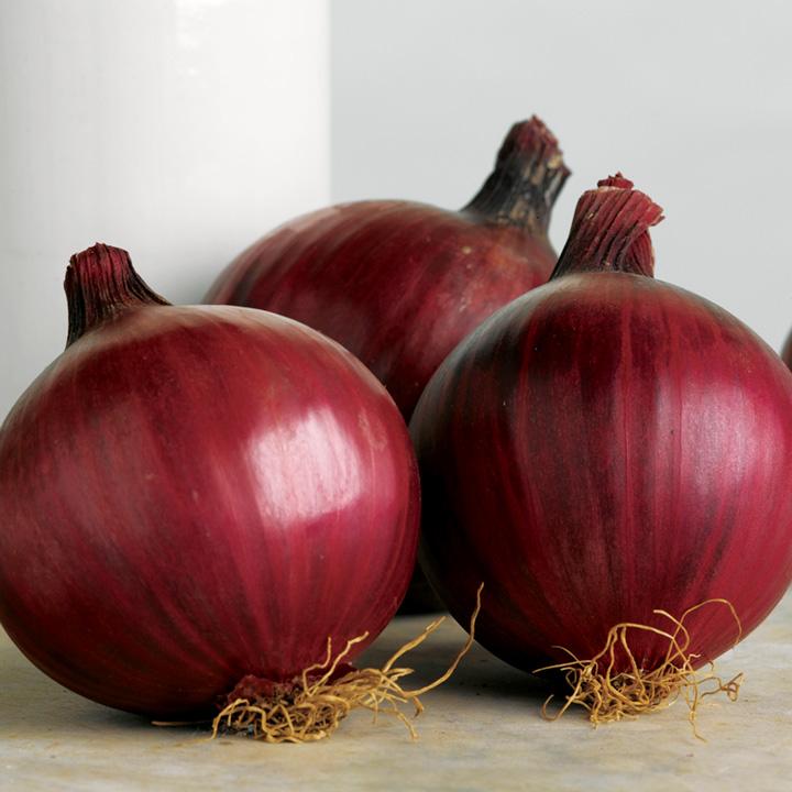 Onion Sets - Red Arrow