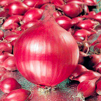 Onion Sets - Red Ray