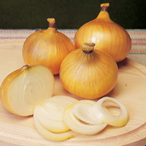Onion Sets - F1 Centurion