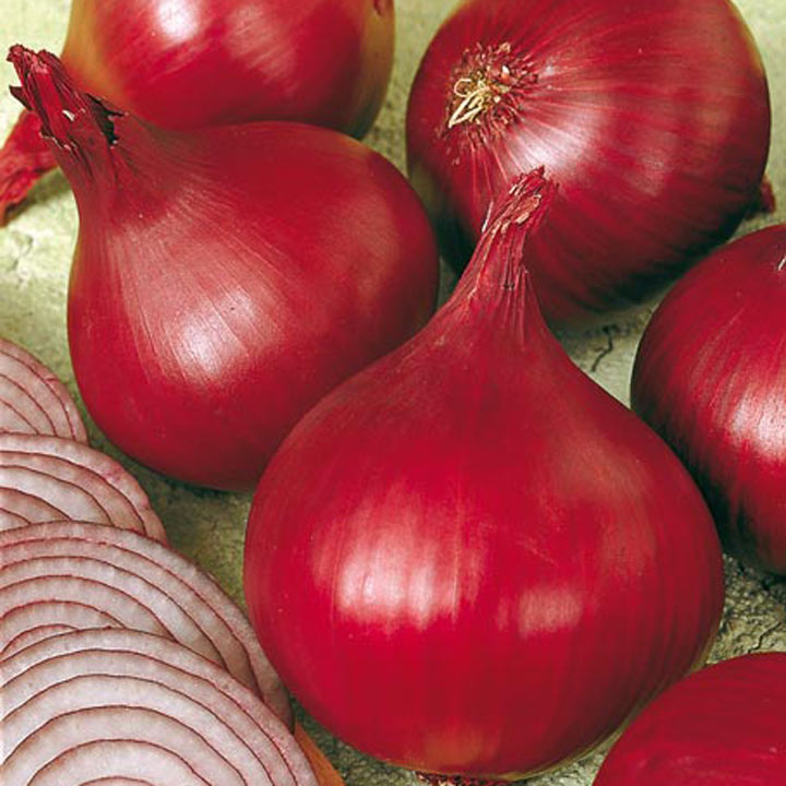 Onion Triple Pack - Spring Planting