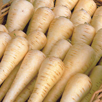 Image of Parsnip Seeds - Albion F1
