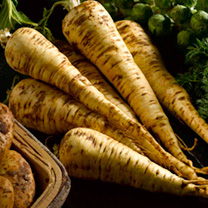 The best long parsnip for exhibition which can be grown to extraordinary size. Good flavour and cooking quality. Row 12m (40'). Recommended for exhibi