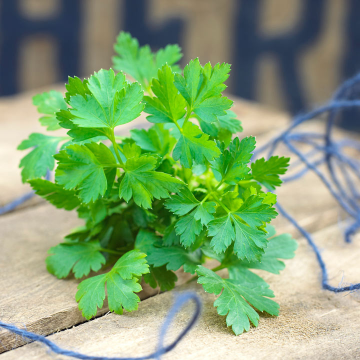 parsley gigante d italia seeds dobies