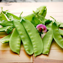 Pea Plants - Snow Pea Green Beauty