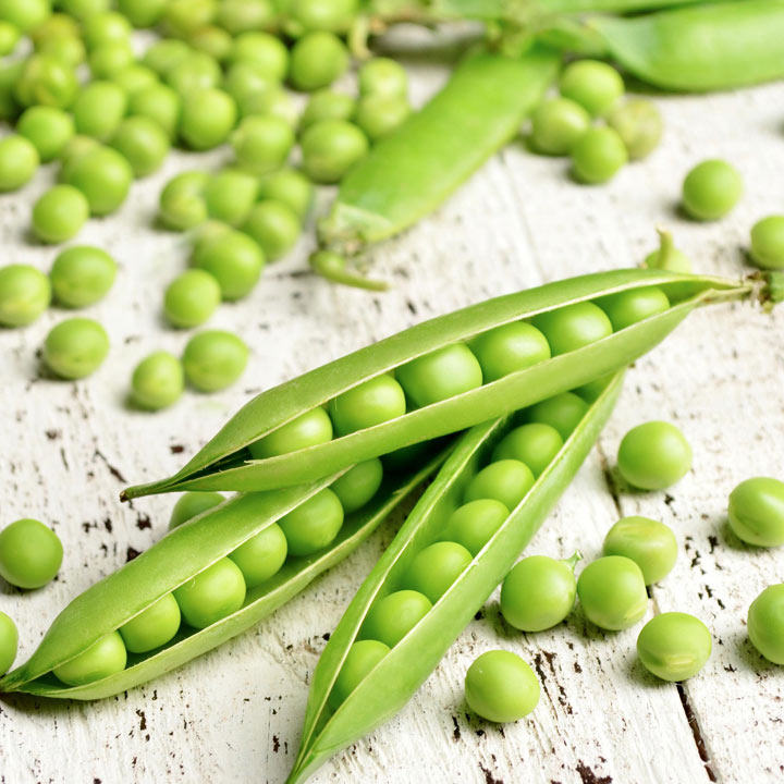 Pea Plants - Champion of England