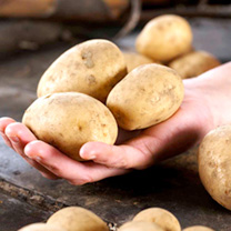 Seed Potatoes - Maris Peer 1kg (Late)