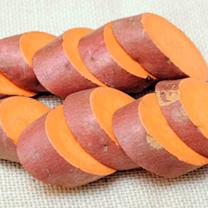 Sweet Potato Plants - Burgundy