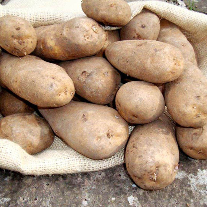 Seed Potatoes - Golden Wonder 1kg