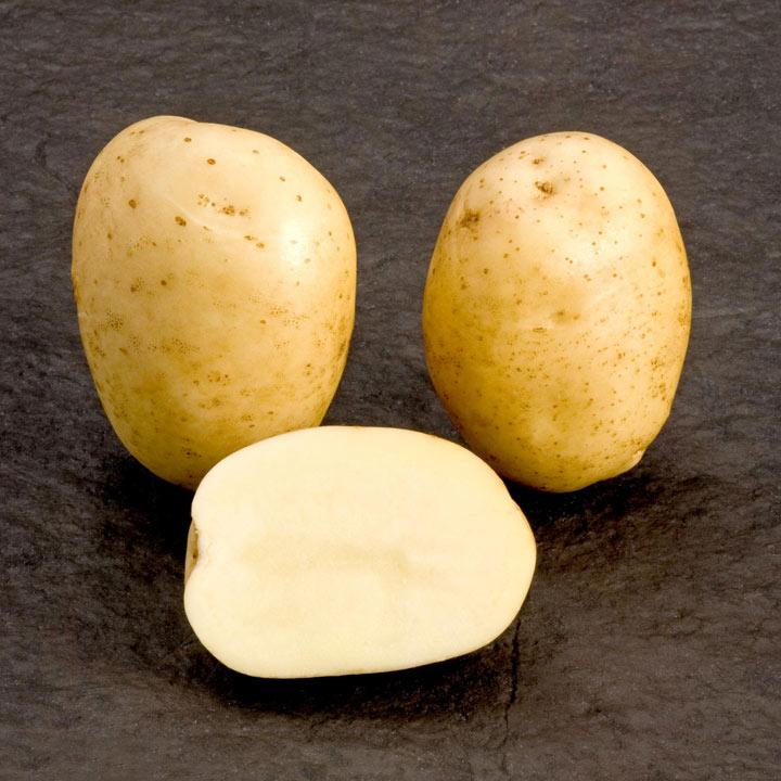 Seed Potatoes - McCain Premiere