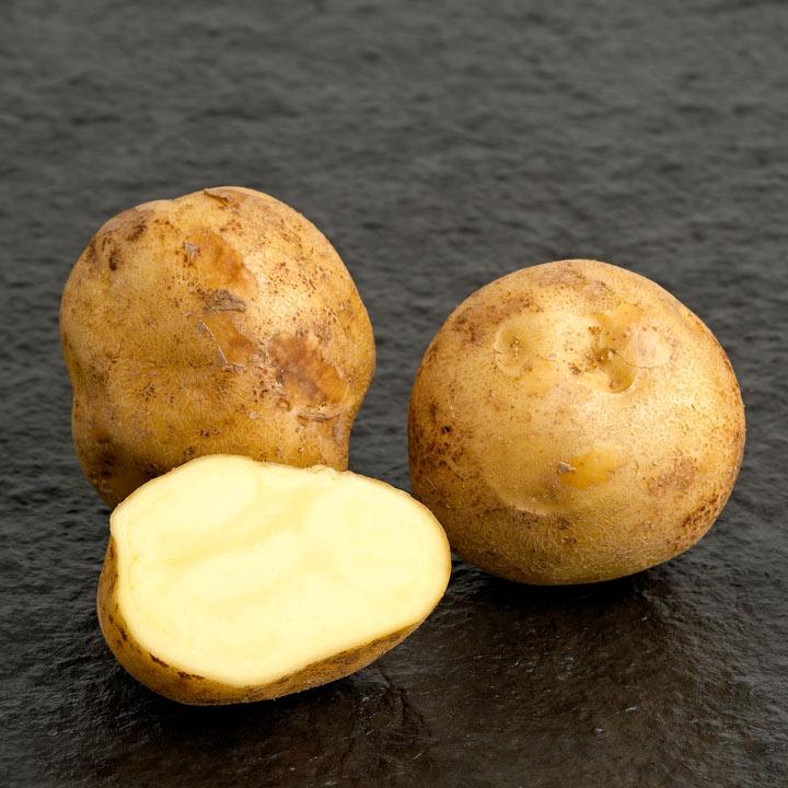Seed Potatoes - McCain Royal