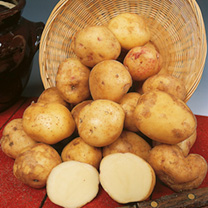Image of Seed Potatoes - Cara 1kg