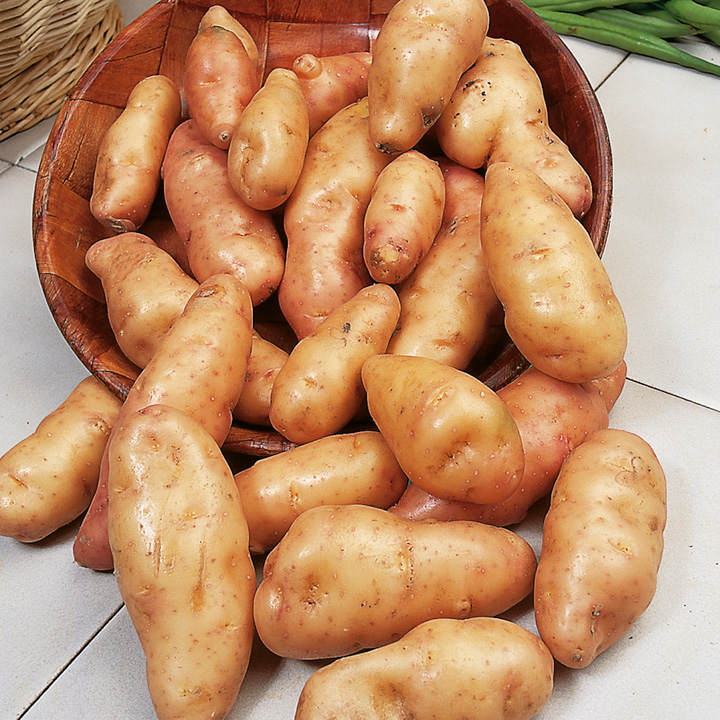 Seed Potatoes - Pink Fir Apple 1kg