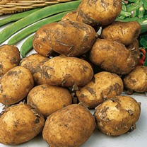 Seed Potatoes - Maris Peer 1kg