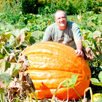 Pumpkin Plants - Atlantic Giant